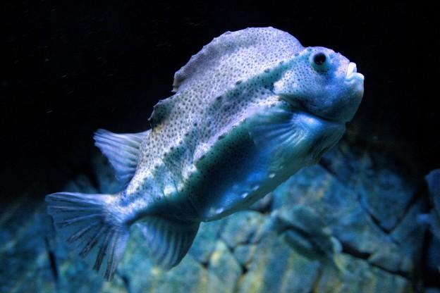 Fische im Stralsunder Ozeaneum